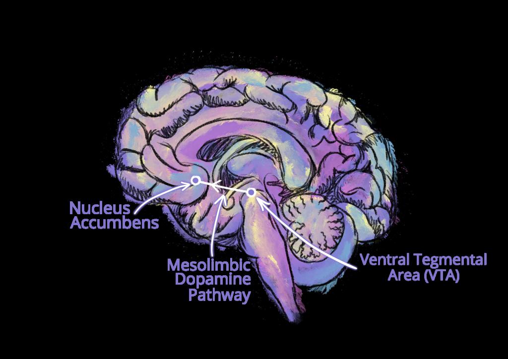 Dopamine Brain Pathway